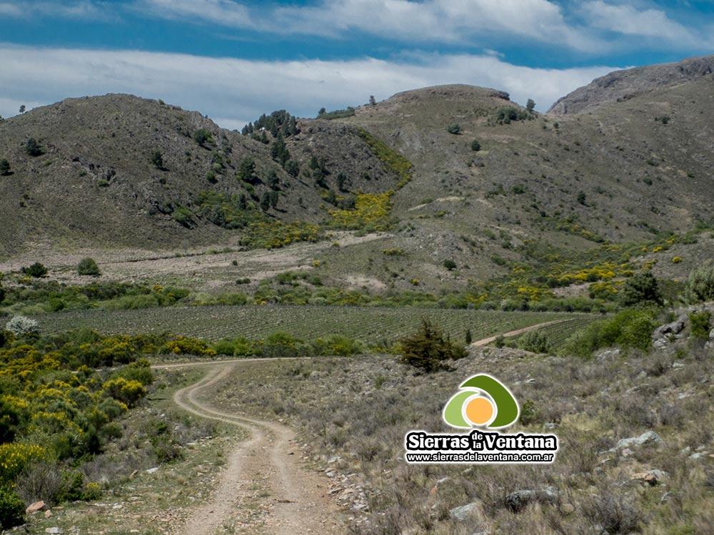 Viñedos Cerros Colorados en Villa Ventana