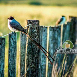 Avistaje de Aves en las Sierras de la Ventana